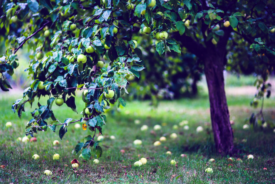 Entrust To Us The Design Of Your Fruit Garden Aesthetic And