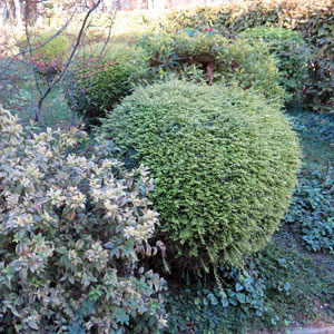 shrub management