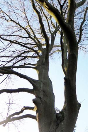 declaration of tree rights