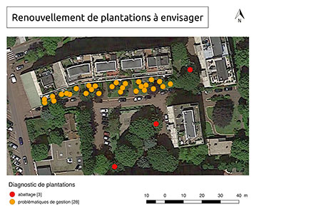 Plantations renewal