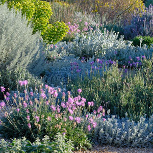 dry garden design