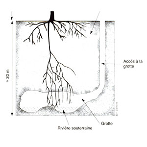 Ornamental tree drought and climate change in the Mediterranean